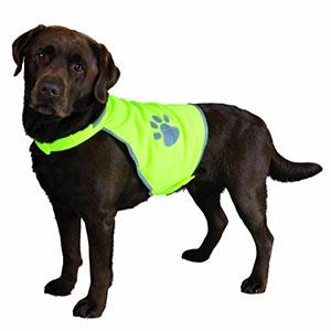 Bruine labrador met een geel veiligheidsvest