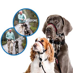 Twee honden met een halti Optifit tegen trekken aan de lijn