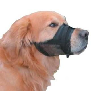 Hond labrador met zwarte nylon verstelbare muilkorf