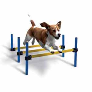 Agility/ Behendigheid