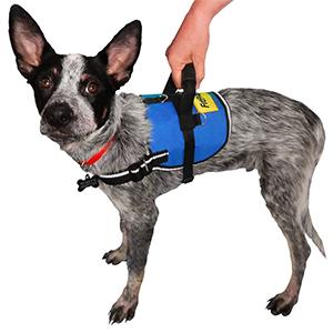 Hondentuig FitPAWS safety harnass met handvat op de rug bij een hond die revalideert of slecht in balans is