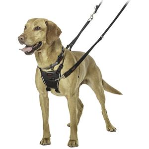 Hond met halti harnas aan tegen trekken aan de lijn