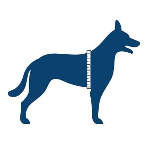 Hond met meetlint om de borst voor opmeten borstomvang