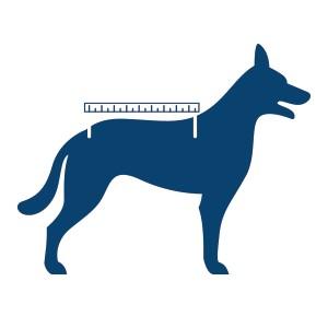 Hond met cm op de rug om ruglengte op te meten