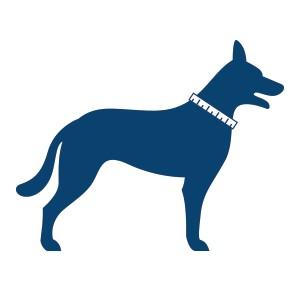 hond met centimeter om nek voor opmeten halsband